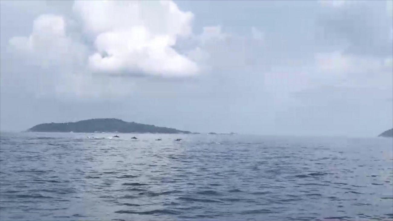 พบโลมาฝูงใหญ่นับ 100 ตัว โผล่ว่ายน้ำเล่นใกล้เกาะสิมิลัน