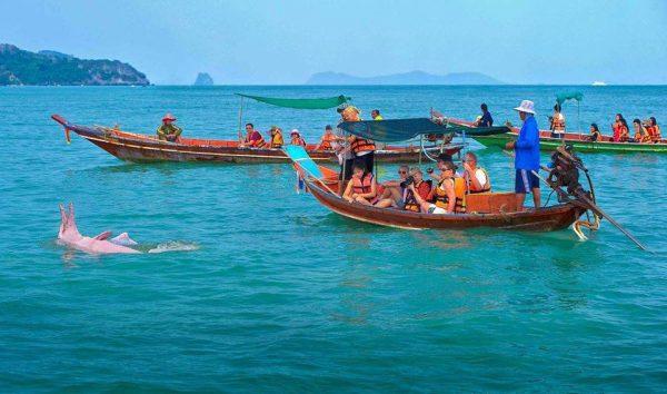 ปลาโลมาสีชมพู